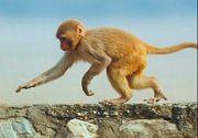 VIDEO   Ce s-a întâmplat cu maimuța fugară din București
