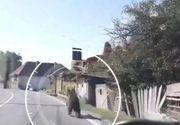VIDEO | Imagini incredibile din Covasna. Un urs aleargă panicat pe o stradă