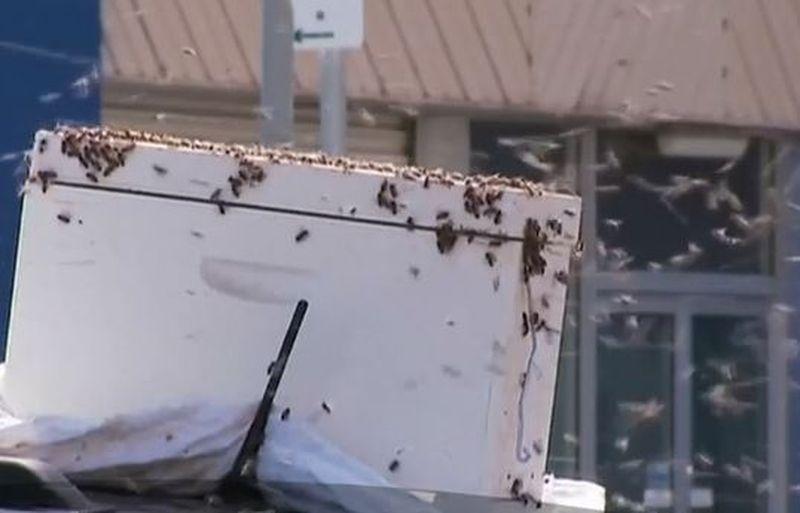 Pățania unui șofer. A găsit mașina invadată de mii de albine