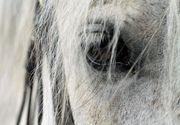 Acțiunea specială de salvare a unui cal căzut într-un bazin adânc de doi metri