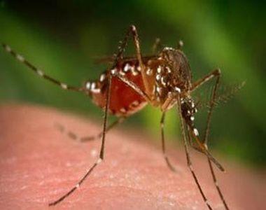 Numărul cazurilor de infecţie cu virusul West Nile din acest sezon a ajuns la 60