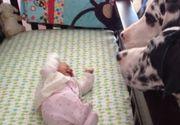 Povestea uimitoare a unor părinți. Cei doi și-au lăsat copiii singuri cu câinii și au încuiat ușa