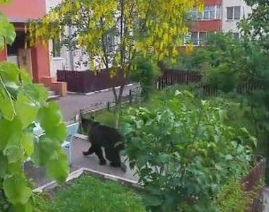 VIDEO | Mobilizare impresionantată după ce o ursoaică și puii săi au ajuns în centru...