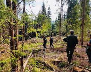 Bărbatul din Vrancea, dispărut în pădure şi căutat de zeci de persoane, a fost găsit...