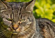 Gestul șocant făcut de o femeie pentru pisica ei. Și-a ucis colegul de cameră cu un ciocan, apoi l-a tranșat pentru că bănuia că i-a omorât felina