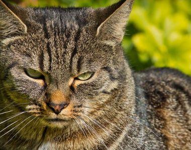 Gestul șocant făcut de o femeie pentru pisica ei. Și-a ucis colegul de cameră cu un...