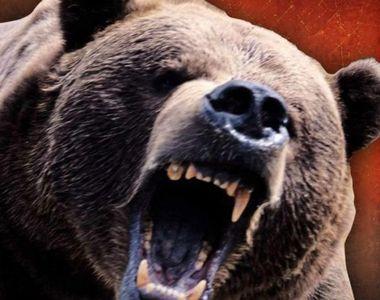 VIDEO | O fetiţă de 4 ani a fost rănită de un urs în judeţul Braşov