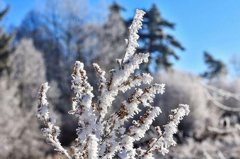 Ce ne aduce iarna 2019-2010? Vezi ce transmit meteorlogii