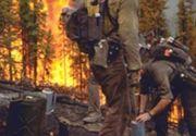 Incendiu devastator în Hunedoara: 20 de hectare afectate