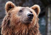 Mesaj RO-Alert, transmis în Făgăraş, după semnalarea unui urs