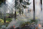 Incendiul de pădure din zona Măgura s-a extins; zeci de pompieri intervin pe patru hectare