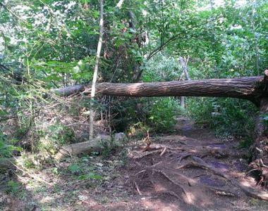 Povestea pădurarului din Cluj care a mituit un polițist pentru a distruge o pădure...