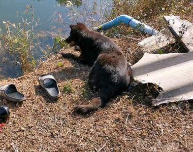 Povestea cutremurătoare a câinelui care care își așteaptă stăpânul să revină din lacul...
