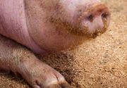 Un bărbat s-a înjunghiat în abdomen în timp ce încerca să taie un porc