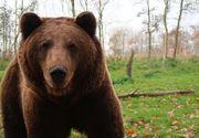 Cioban găsit mort la marginea unei păduri; el ar fi fost atacat de un urs