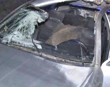 Accident în Dâmboviţa, din cauza unui porc mistreţ. Şoferul a fost grav rănit