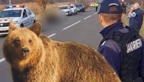 VIDEO | Povestea tragică a ursului care a fost eutanasiat după 18 ore de agonie