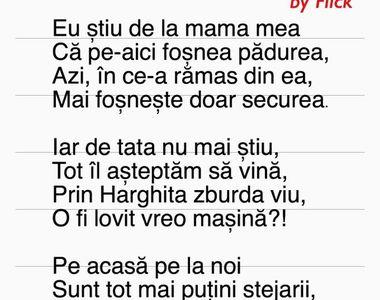 Scrisoarea emoționantă care a devenit virală după incidentul cu ursul din Harghita...
