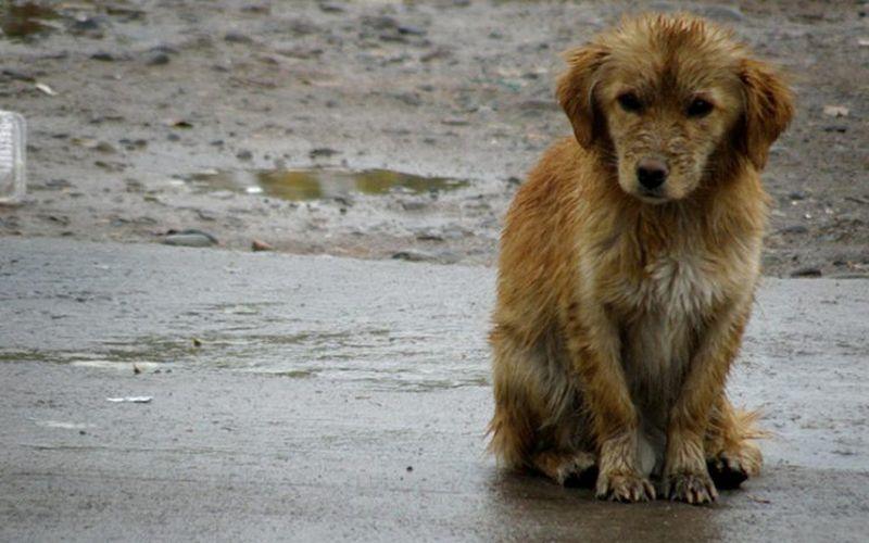 Eroii există! Un grup de voluntari umple străzile cu adăposturi termice pentru câinii vagabonzi