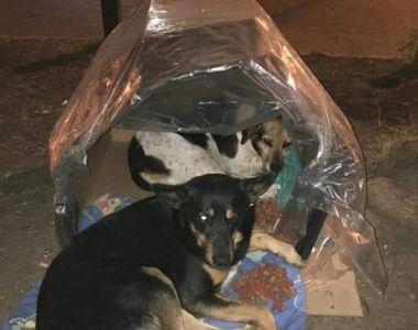 Eroii există! Un grup de voluntari umple străzile cu adăposturi termice pentru câinii...