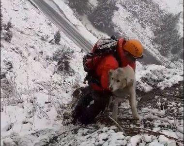 Operațiune de salvare pentru un câine părăsit de câteva zile pe Transfăgărășan