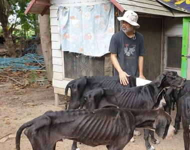 Regele Thailandei a decis să adopte 13 câini găsiţi aproape morţi
