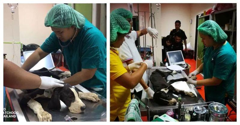 Regele Thailandei a decis să adopte 13 câini înfometaţi găsiţi aproape morţi