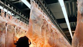 Incendiu devastator la o fabrică de mezeluri, în Câmpia Turzii (VIDEO)