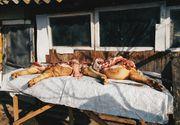 Ignat. Când se taie porcul de Crăciun conform tradiției