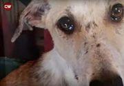 Câine abandonat la un adăpost, refuză orice contact cu oamenii