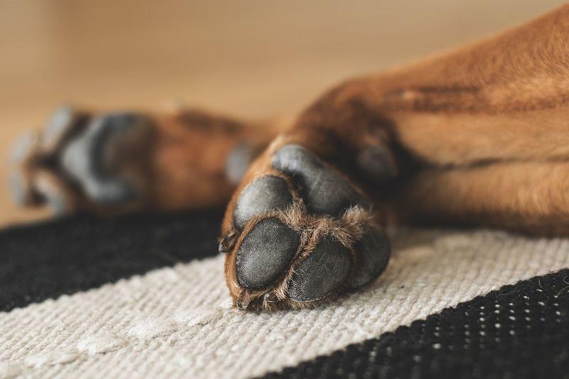 Gestul șocant al unui bărbat din Timișoara: și-a aruncat câinele de la etajul patru pentru că l-a trezit din somn