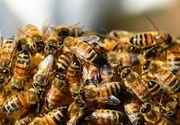 Moartea neașteptată a unui tată: A fost înțepat de albine la înmormântarea fiului său