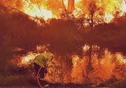 Păduri întregi din Australia au fost distruse de incendii devastatoare