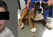 Român condamnat la închisoare după ce a ucis un câine