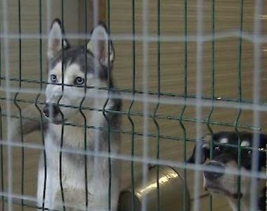 VIDEO   Pensiunile pentru animale, pline de Sărbători