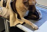 Satu Mare - Nişte copii sunt suspecţii principali în cazul câinelui căruia i-a explodat o petardă în gură