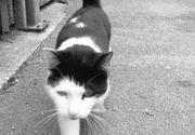 Constanţa: Anchetă la Spitalul judeţean după ce mai multe pisici au ajuns în Secţia de Radiologie odată cu îndepărtarea plafonului fals, pentru lucrări de reparaţii