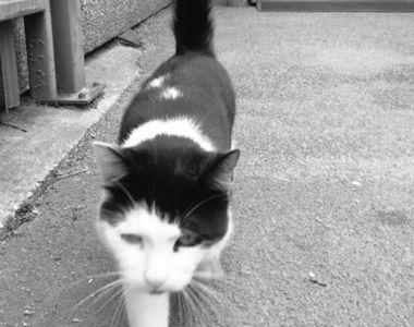 Constanţa: Anchetă la Spitalul judeţean după ce mai multe pisici au ajuns în Secţia de...