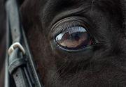 Caz uluitor la Vaslui. Un cal a fost ucis pentru că nu a tras o căruță cu lemne