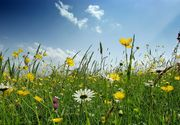 Meteo: vreme de primăvară, în miezul iernii