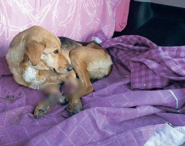 Brăila: câine chinuit fără milă. Cum a fost găsit animalul. Poliția e în căutarea...