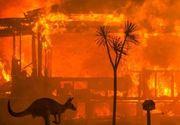 Incendiile din Australia au pârjolit o suprafaţă de 103.000 de kilometri pătraţi, mărimea Coreii de Sud