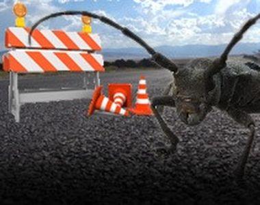 VIDEO | Autostrada Sibiu-Pitești, blocată de un gândac