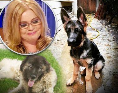 Adevărul despre câinii găsiți în locuința Cristinei Țopescu. Câte animale au murit și...