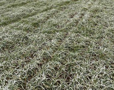 Grav accident rutier  în Constanța după ce un microbuz s-a răsturnat, 11 persoane fiind...