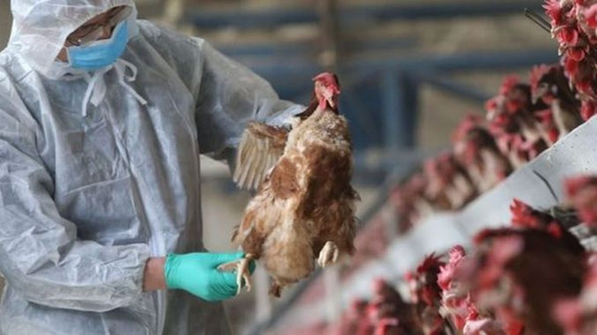 căi de infestare aviară a lung cancer genetic mutations