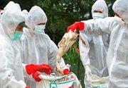 ANSVSA: În România a intrat carne de curcan provenind din fermele din Ungaria aflate în zona de restricţie din cauza gripei aviare/ Trei depozite din judeţul Bihor au primit astfel de produse
