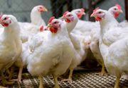 ANSVSA: Carnea de curcan din Ungaria, din ferme aflate în zona de restricţie din cauza gripei aviare, adusă de cele trei depozite din Bihor, distribuită în 26 de judeţe