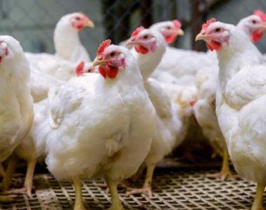ANSVSA: Carnea de curcan din Ungaria, din ferme aflate în zona de restricţie din cauza...
