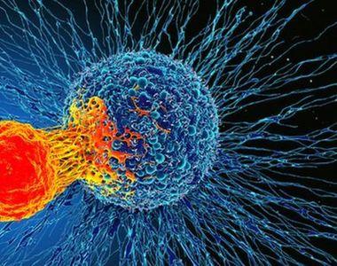 O parte nou descoperită din sistemul imunitar uman ar putea trata toate tipurile de cancer